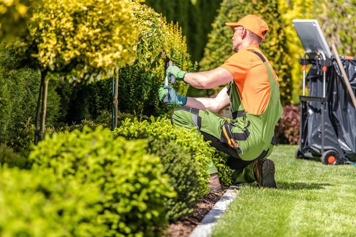 Aanleg van struiken in de tuin