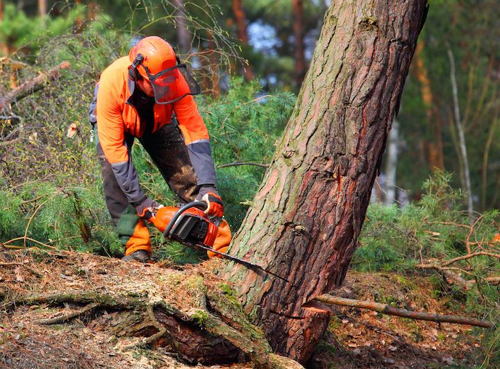 Vellen van boomstam door vakman