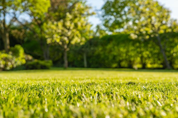 Prachtig groen gazon dankzij regelmatig onderhoud