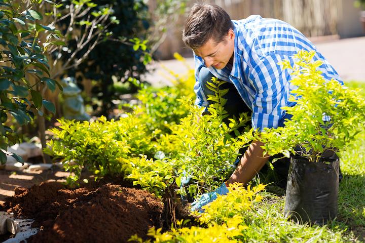 Tuinman uit Oost-Vlaanderen aan het werk in de tuin