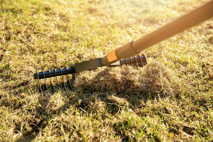 Voorbeeld van een manuele verticuteerhark voor kleine graspartijen