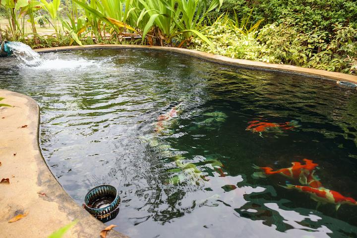 Natuurvijver met vissen